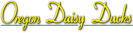 Oregon Daisy Ducks